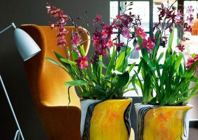 orchidsinfo.eu