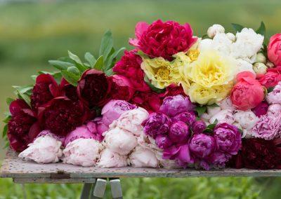 Puur Sesonal Flowers pioenen