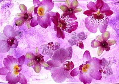 orchidee Elize Eveleens, Wilfried Overwater