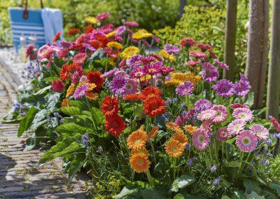 Florist_garvinias05092016042LOWRES
