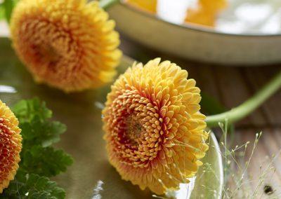 florist_pomponiLOWRES