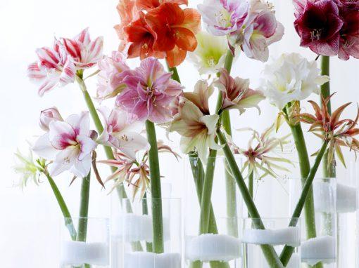 Bloemenkalender