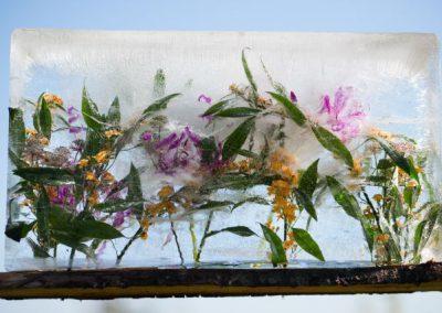 zomerbloemen30_9_-17Low